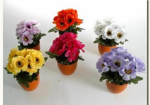 Полив цветов во время майских каникул